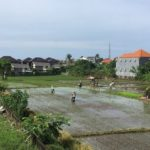 Первые впечатления от Бали